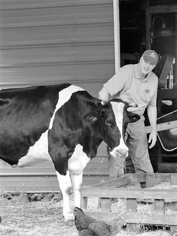 Man and a cow